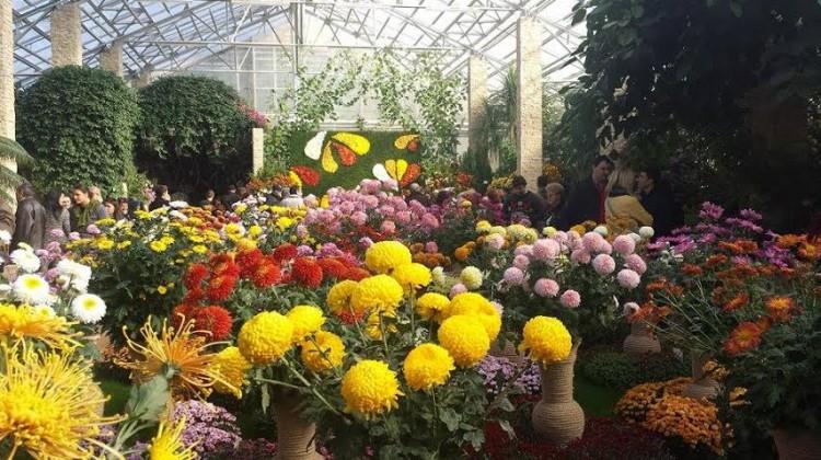 Expozitie crizanteme 2015